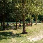 campinglescerisiers-gorgesdutarn201.jpg